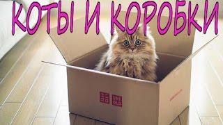 Смешное, интересное видео с котами - ПОЧЕМУ КОТЫ ЛЮБЯТ КОРОБКИ & КОТЫ В КОРОБКАХ