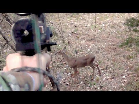 Double Doe Archery Kill - Oct 14, 2014