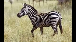 Животные Африки -1