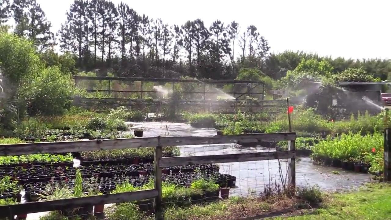 Biosphere Nursery Winter Garden Fl