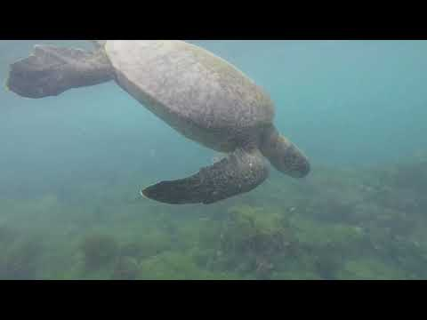 South America trip 2017 Episode 3 (Swim with turtles at Post Office bay, Floreana)