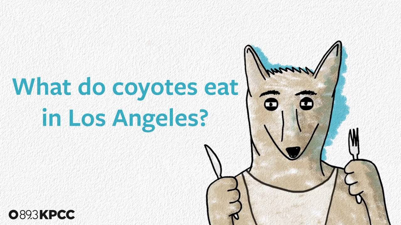 LA Food Guide - 15 Must Hit Places to Eat in Los Angeles ...