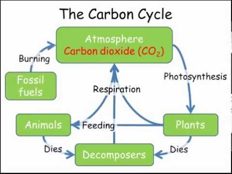 The Carbon Cycle Diagram Gcse Earthquake Epicenter Nitrogen Cycles Combined Science Biology