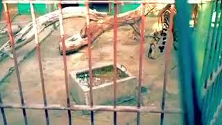 In Memories Of Dubai Zoo Jumeirah