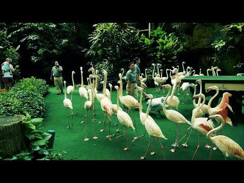 bird show - the birds show at singapore -jurong birds park