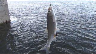Рыбалка на ельца хороший клев | Как настроить снасть на ловлю ельца