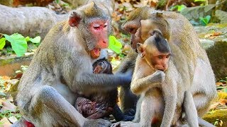 Jane Angry All Little Baby Monkey That Cause Janet Get Anxious Feel Not Well
