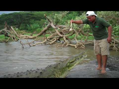 Man Gets Eaten By Alligator! - YouTube