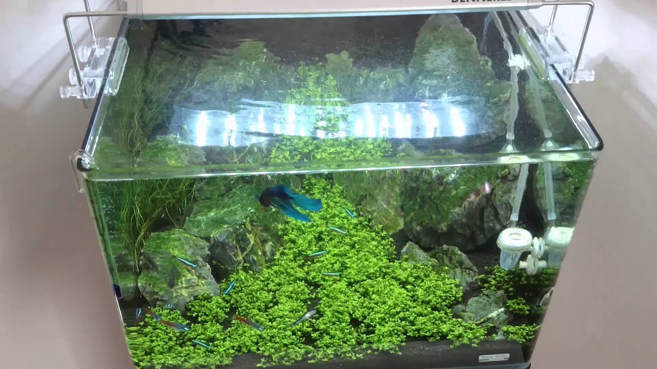 Eclairage Led Dennerle Dennerle Scapers Tank 35 L 15w Led
