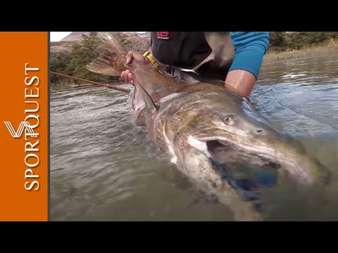 Fly Fishing For King Salmon On The Caterina River, Argentina 🇦🇷