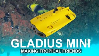 Making Tropical Friends With My Underwater Drone - Gladius Mini | DansTube.TV