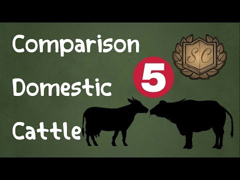 Domestic Cattle Comparison [5 Species] - Saiful Chemistry