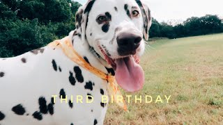 He is such an adult now | Blue's Third Birthday | Dalmatian vlog 2020 | Rita H & Co.