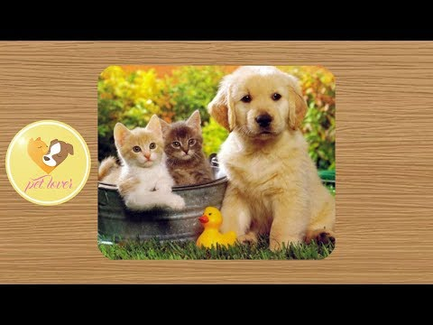 Cute dogs and cats funny video ♥ #24 | Pet lover