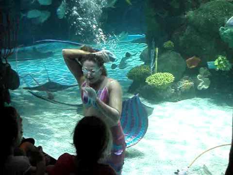 Mermaid Swimming At The Aquarium At The Silverton Hotel