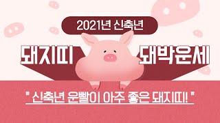 """2021년 돼지띠운세 """"신축년 운빨이 아주 좋은 돼지띠!""""/ 인천용한점집 [더샤머니즘]"""
