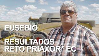 Conoce los resultados de Eusebio tras aplicar Priaxor® EC