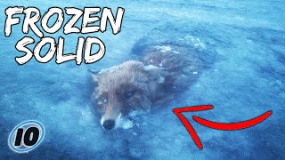 Top 10 Scary Animals Found Frozen In Time