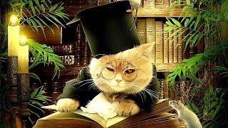 Котэ Саратовский. Симпатичные коты кошки котята Смех / Приколы