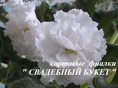 """сорт фиалки """" СВАДЕБНЫЙ БУКЕТ """" // моя коллекция"""
