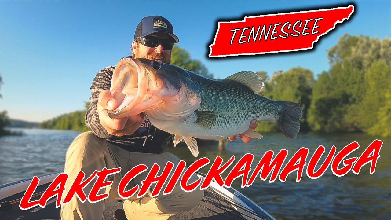 Is Lake Chickamauga Really That Good Big Bass Eats A Spinnerbait Youtube