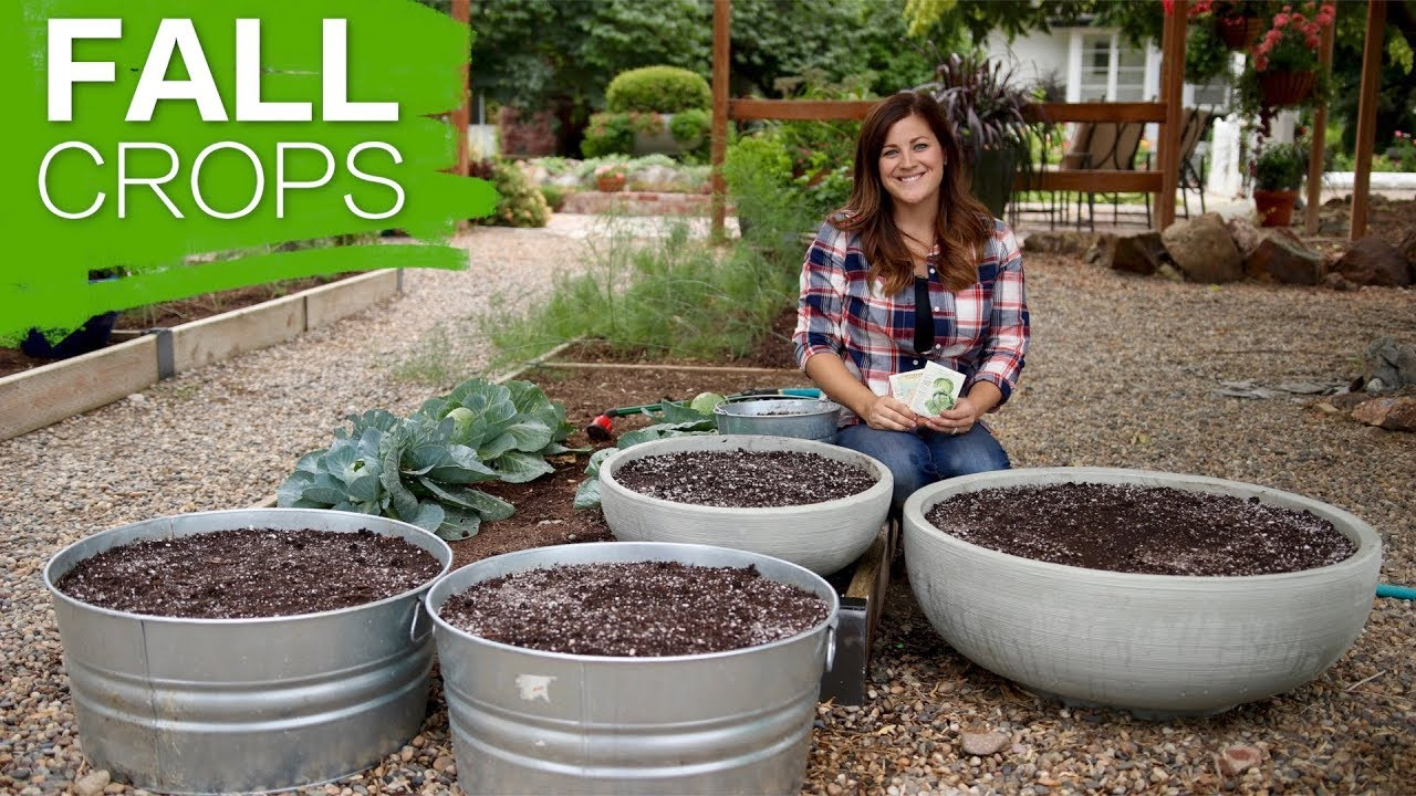 Growing Fall Crops In 10 Steps // Garden Answer