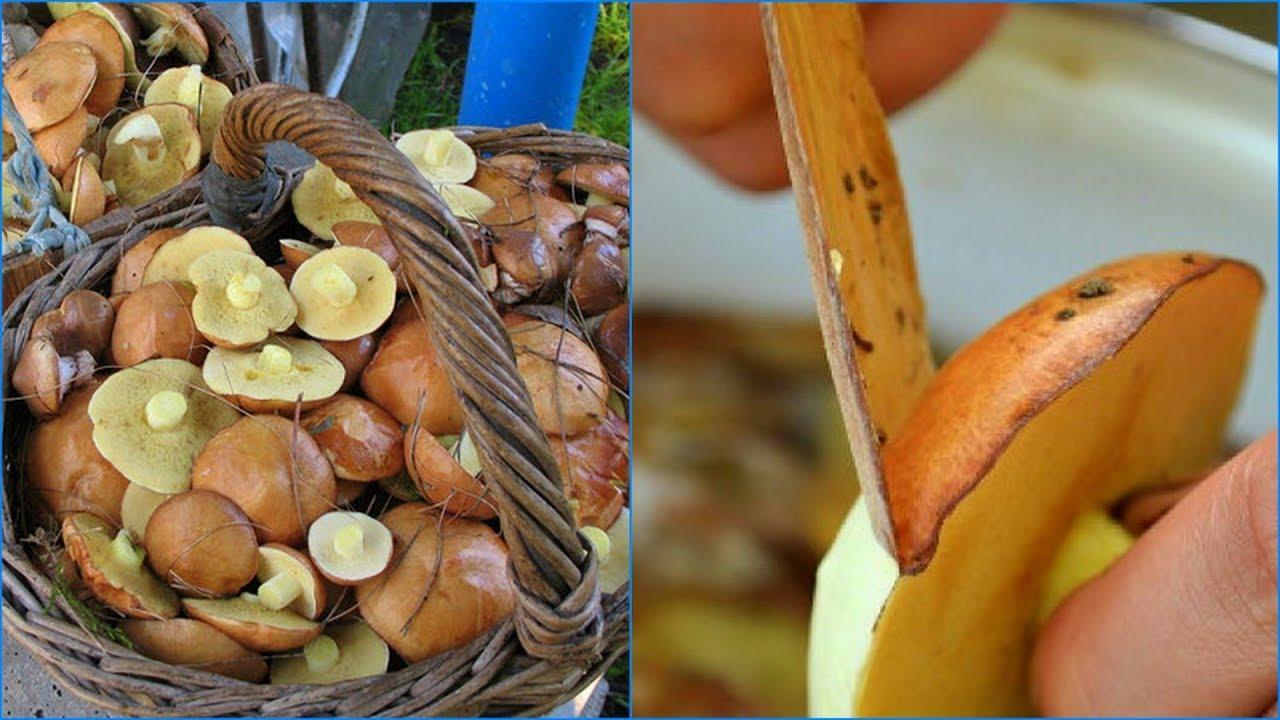 зачем чистить грибы маслята