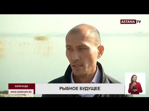 В Карагандинской области разрешат ловить ценную рыбу бесплатно