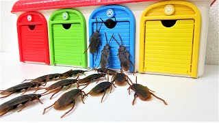 Thomas, Disney Cars, Tayo, Cockroach Monster Story, Spiderman, Chuggington