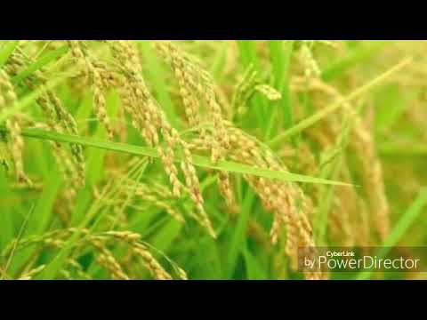 Sonar Tori by Rabindranath Tagore recited by Sreeparna Banerjee Mitra