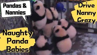 「ああもう、きりがないってば!」子パンダたちの大脱走に飼育員さんもつらいよ