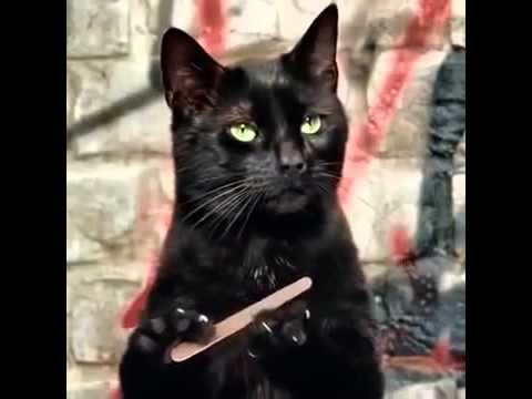 Cat Black Nails Gif