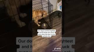 Cat: Tricks Dog Into Cage #Shorts (See Description)