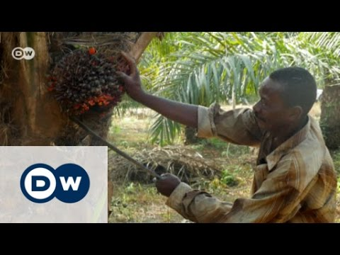The search for sustainable palm oil | DW English