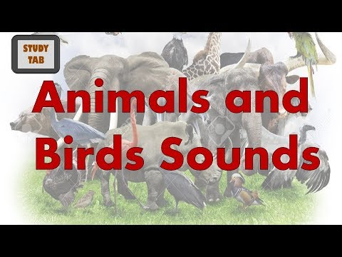 Animals and Birds Sounds : Kids Learning