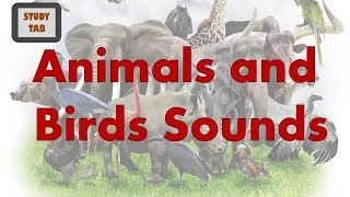 Animals and Birds Sounds : Kids Learning screenshot 1