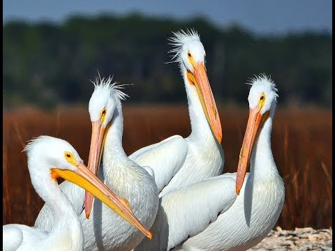 Wildlife Scenes in the Salt Marsh