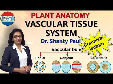 Vascular tissue system- radial, conjoint and concentric vascular bundles