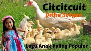 Download LAGU ANAK CIT CIT CUIT (BEBEK BERENANG, BURUNG, SAPI, DLL) DITHA SOFYAN, LAGU ANAK TERPOPULER