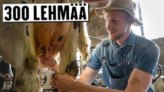 Minkälaista on olla töissä lehmätilalla? (reupload)