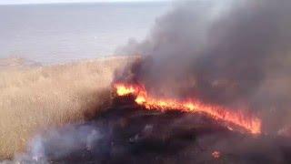 Поджог камыша в Таганроге