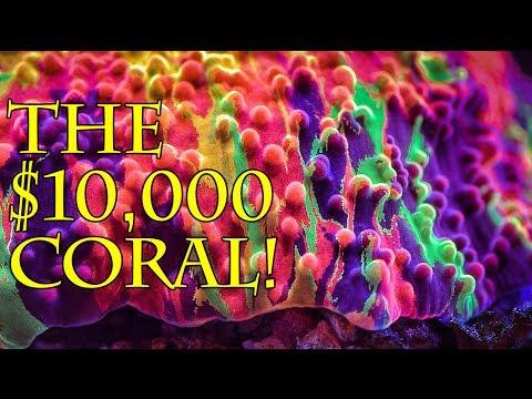 The Purple Monster Jawbreaker Mushroom Is Valued At $10,000!