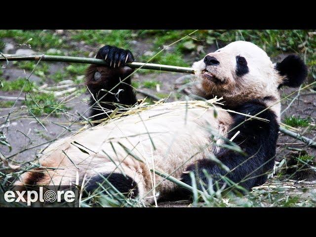 Happiness Village Baby Panda Garden
