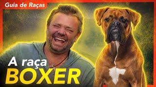 TUDO SOBRE A RAÇA BOXER!   RICHARD RASMUSSEN