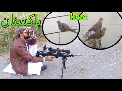 Dove Hunting In Thal Pakistan With PCP Airgun 2019-2020