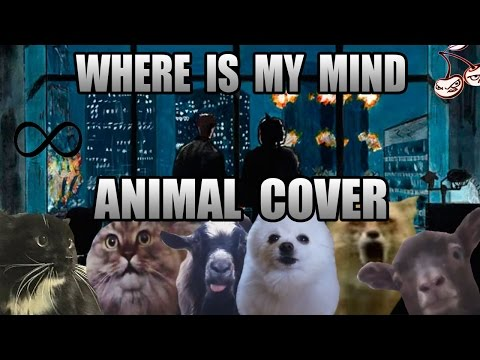 The Pixies - Where Is My Mind (Animal Cover)