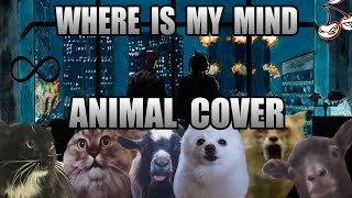 Baixar The Pixies - Where Is My Mind (Animal Cover)