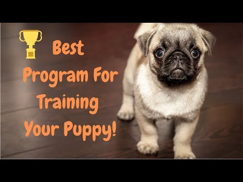 best-puppy-training-program---how-to-teach-your-puppy-intelligence-obedience-good-behavior