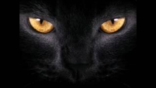 Что будет если смотреть кошкам долго в глаза