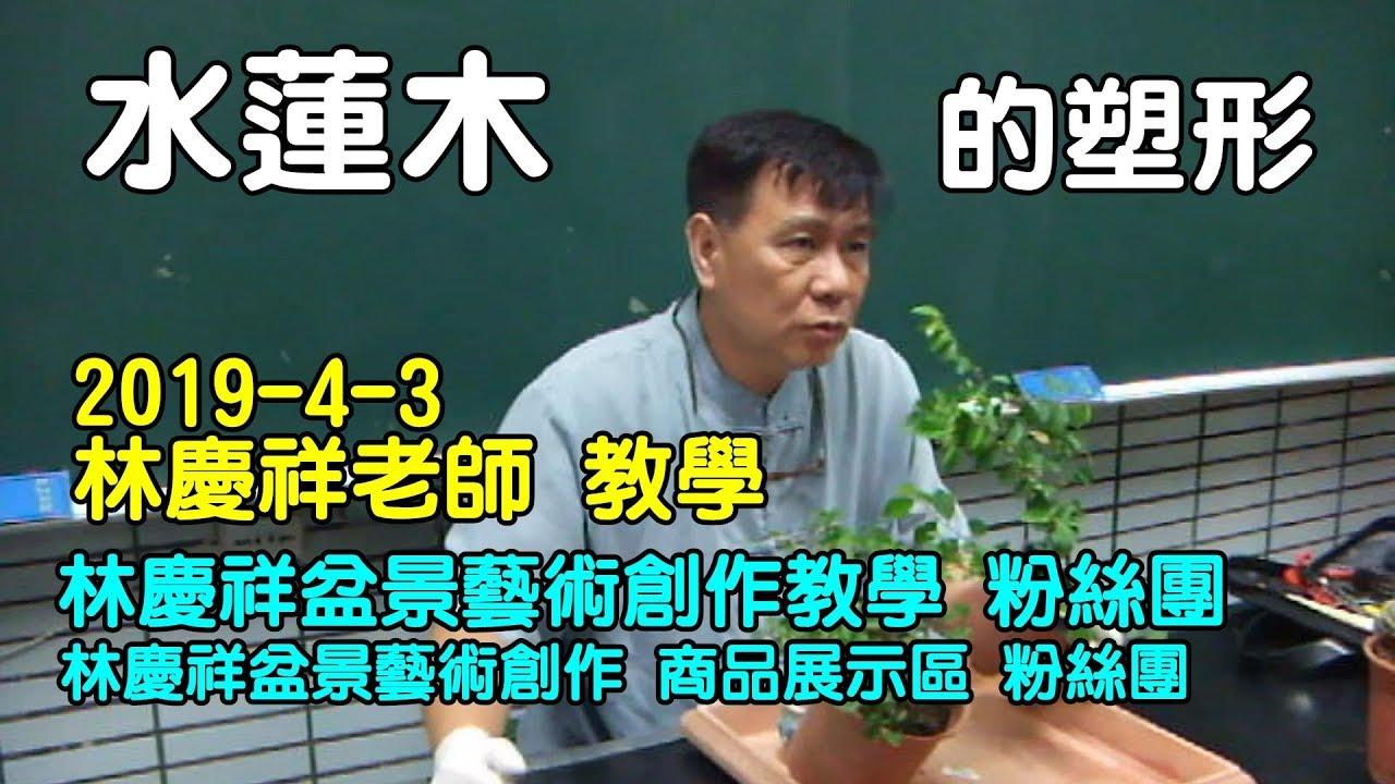 林慶祥盆景藝術創作教學團隊 Line : 0936456168 ( 水蓮木的塑形 ) 2019-4-3 - YouTube